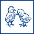 肉鸡孵化场